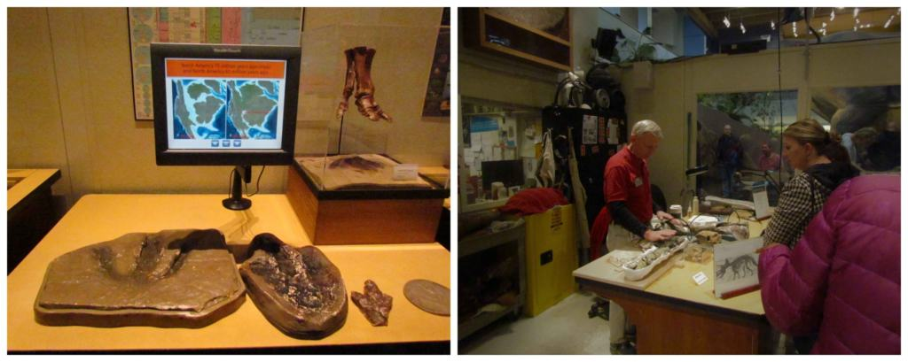 The dino lab is a good place to learn more about fossils and the processes for preserving them.