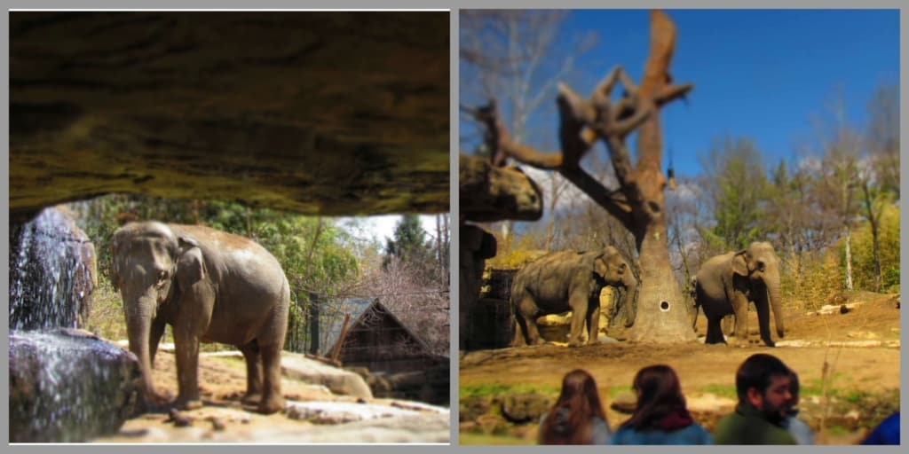 The elephant exhibit offers great views, while allowing the animals freedom to raom.