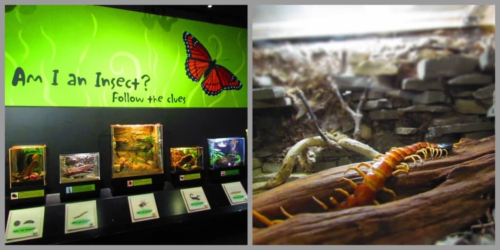 Insects of all kinds can be found in the Insectarium at the zoo.