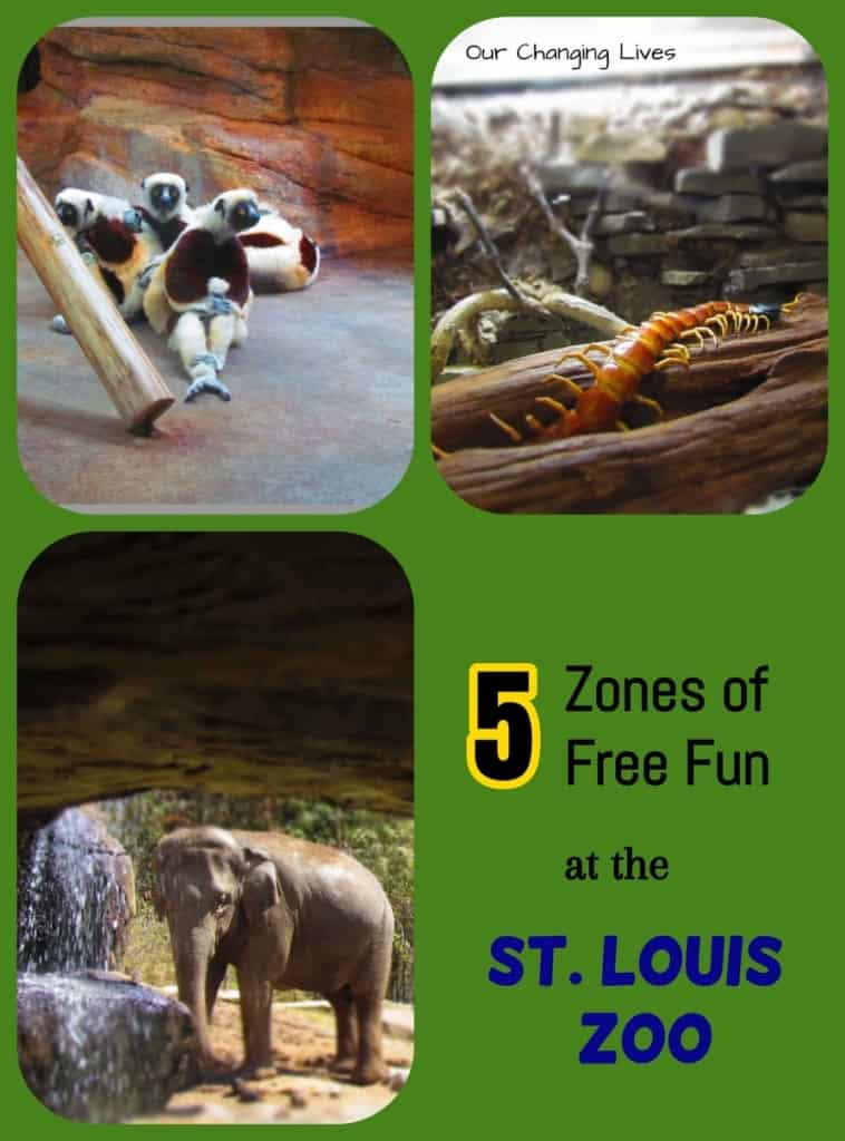 Saint Louis Zoo-St. Louis-zoological park-animals-mammals-travel-bloggers
