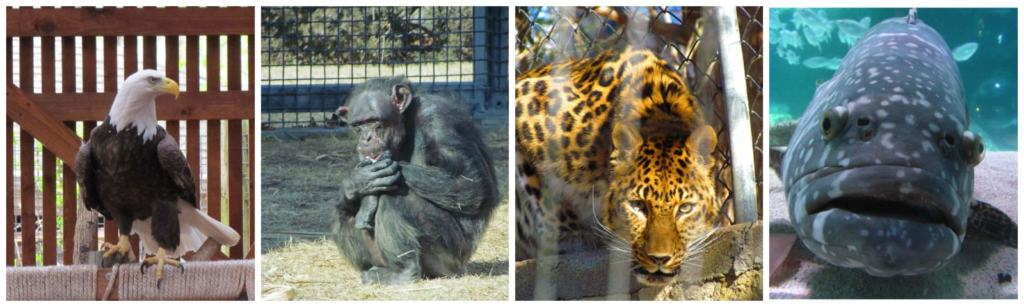 Whenever we visit a zoo it seems that the animals are as interested in watching us as we are of them.