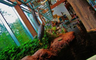Taxidermied creatures show examples of the wildlife native to Arkansas.