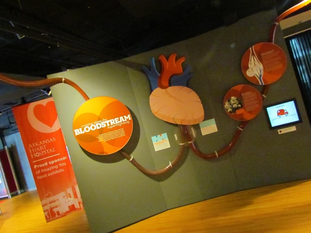 The Amazing You section of the museum of Discovery teaches all about the human body.