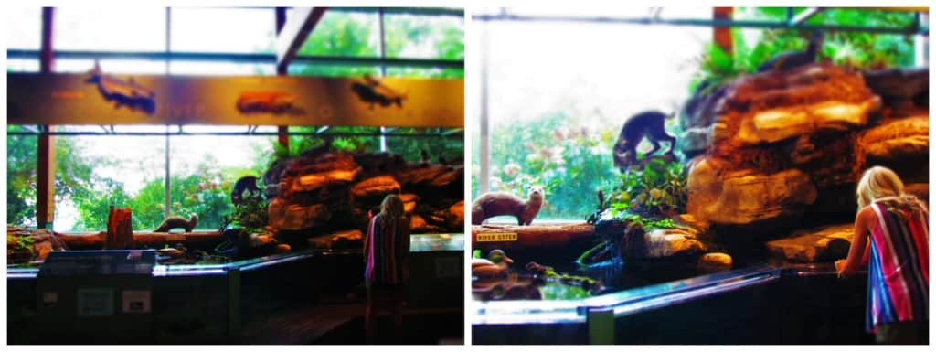 Visitors examine the waterways exhibit at the Central Arkansas Nature Center.