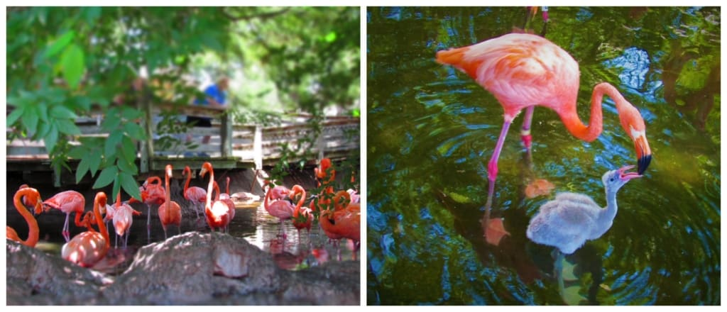 The flamingo area offers a shaded break from the summer heat.