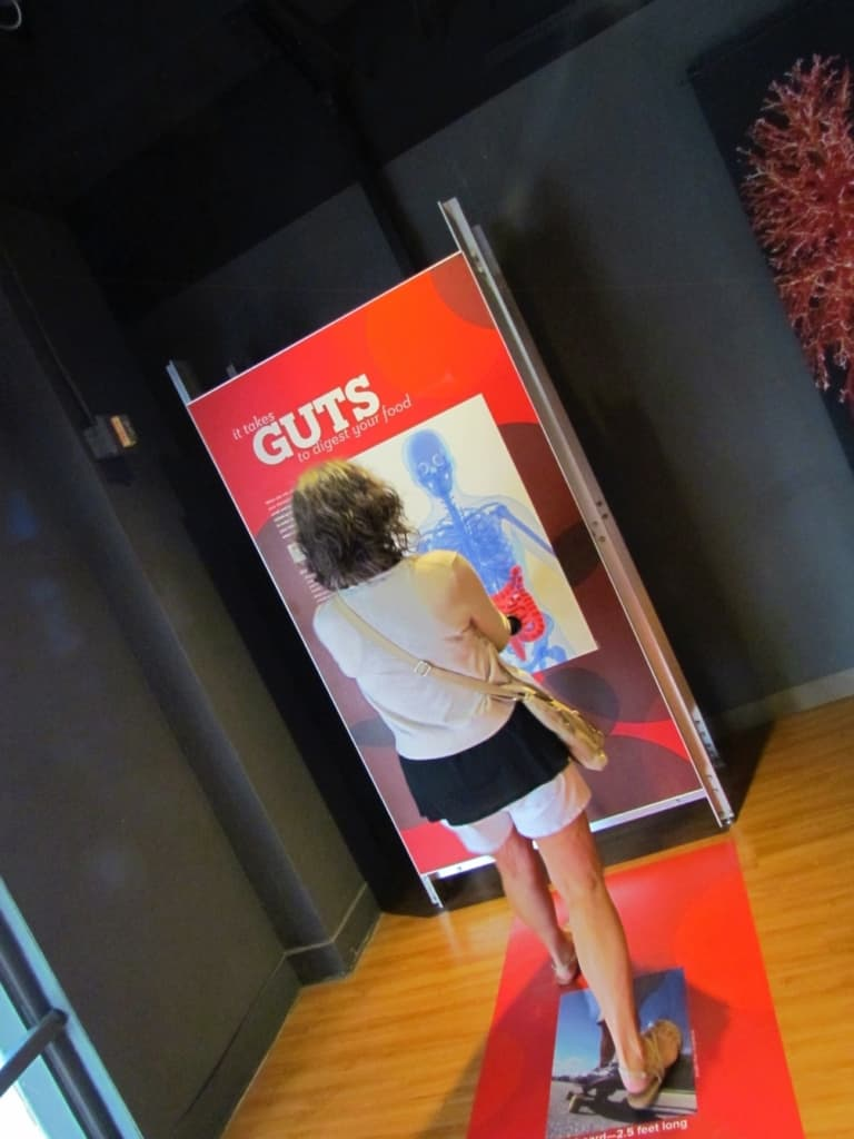 At the Guts exhibit, visitors can learn about the digestive tract.