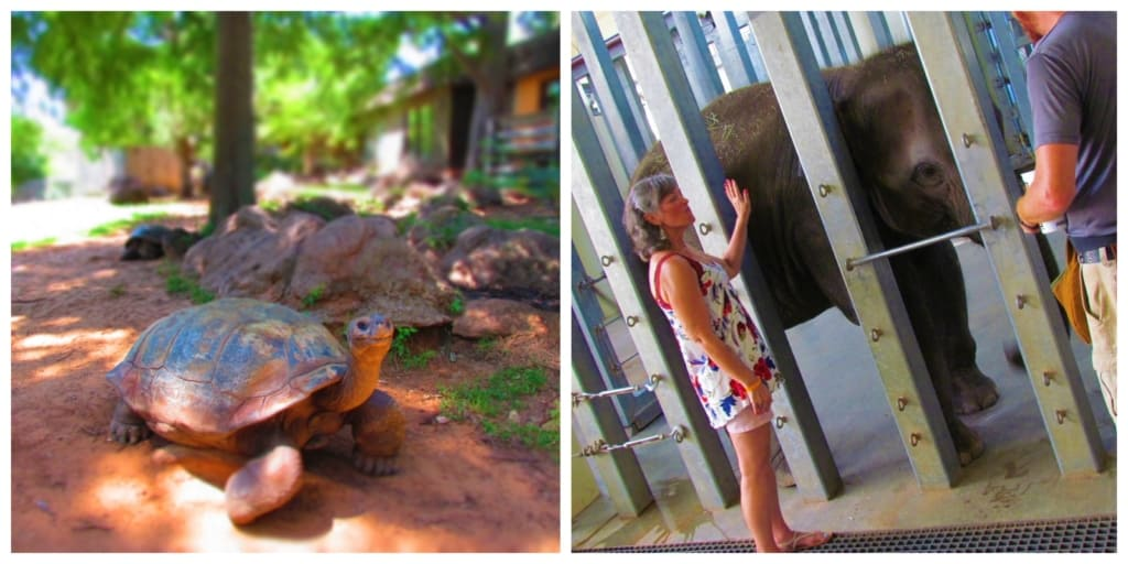 A visit to the Oklahoma City Zoo is filled with plenty of animal experiences.