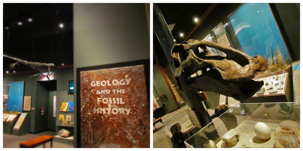The McClung Museum is a good place to learn more about the duck-billed dinosaurs that once traveled this region.