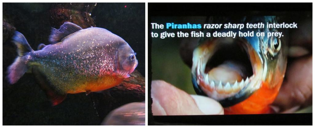 Lots of educational videos and placards are one of the 6 reasons to visit the Ripley's Aquarium.