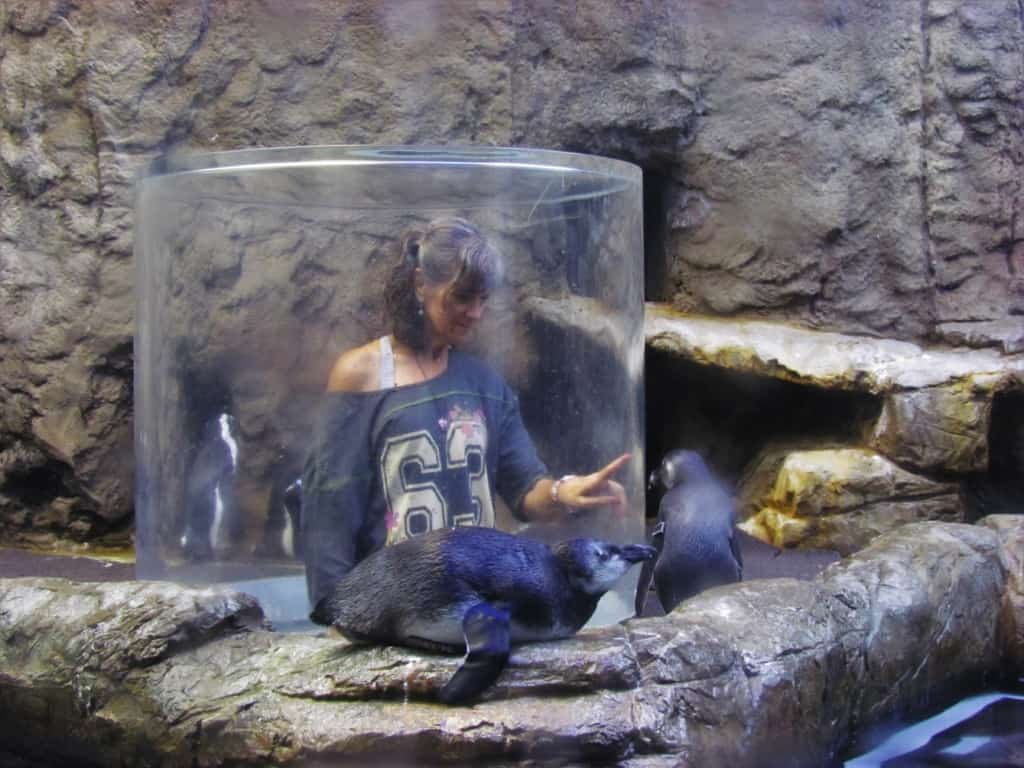 Crystal enjoys getting close up to a group of penguins.