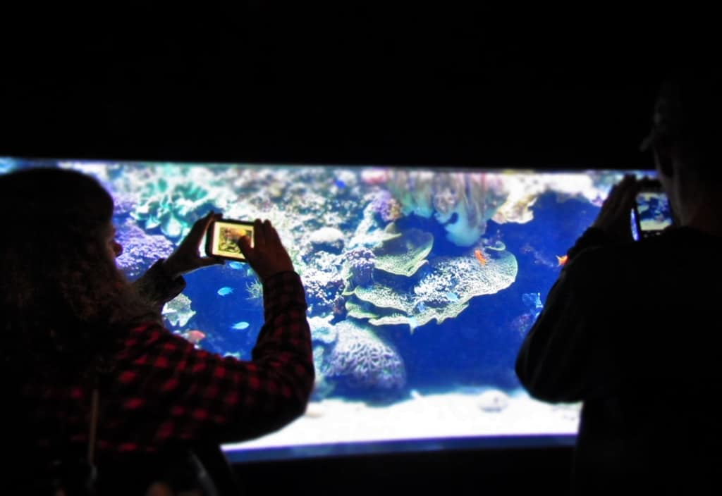 Visitors take pictures of exhibits with cameras and cell phones.