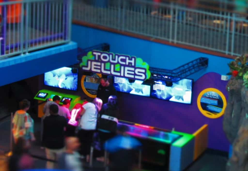 The Touch Jelly exhibit is a chance to pet a creature that is almost magical.