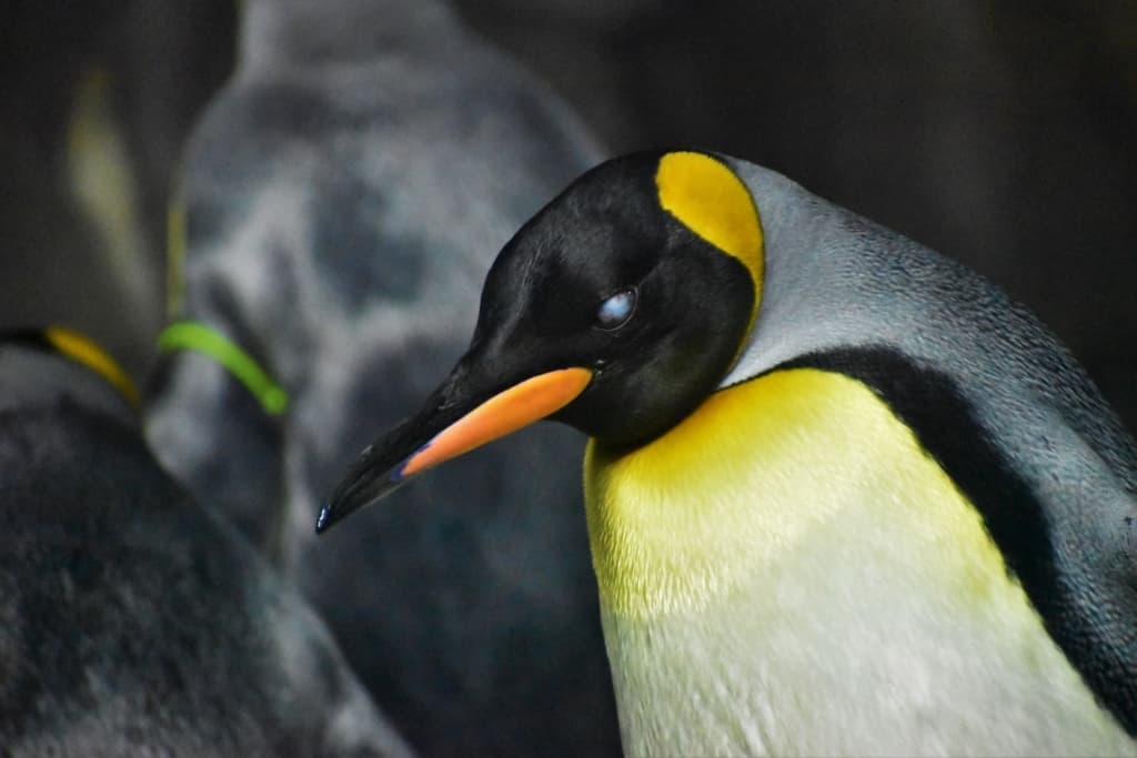 Taking a fresh look at the Kansas City Zoo included a visit to the penguin exhibit.