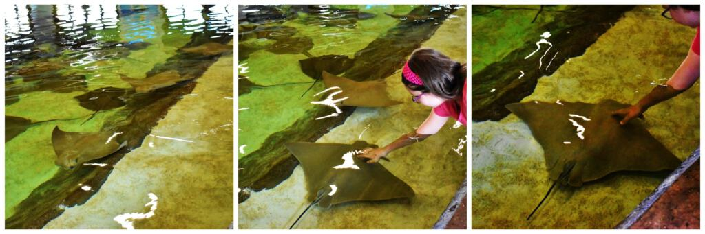 The stingray exhibit gives visitors a chance to touch these water loving creatures.
