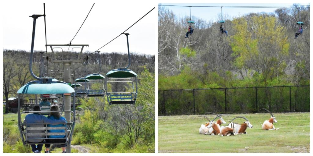 The overhead Sky Trail offers guests an opportunity to see the zoo from a different perspective.