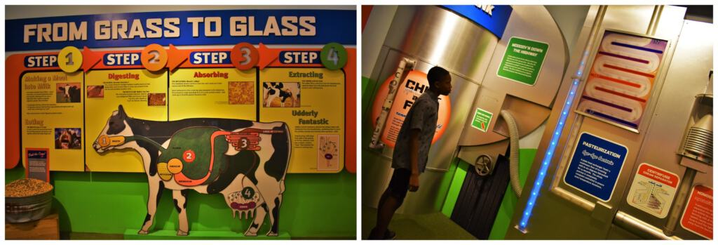 Our science search uncovered an exhibit that showed all of the steps required to get milk from the cow to our homes.