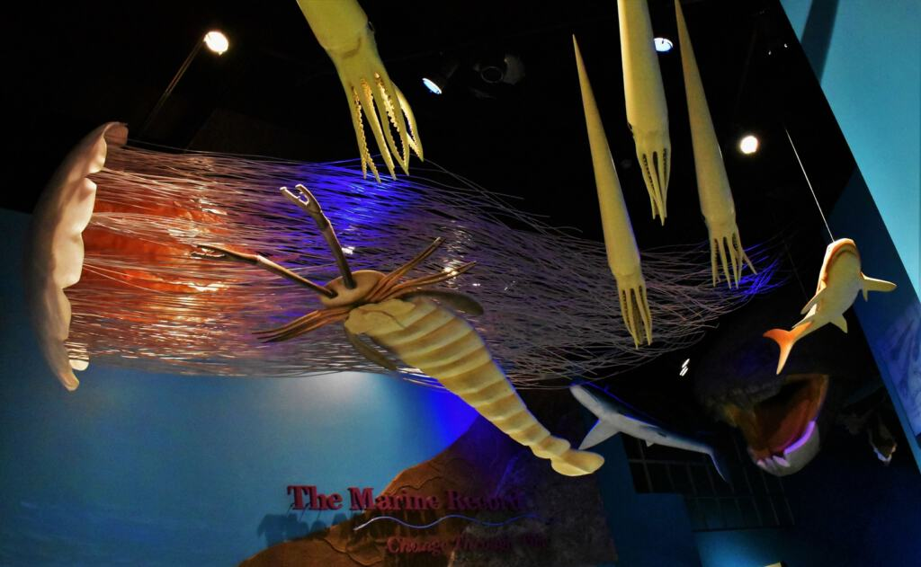The illinois State Museum highlights some of the amazing sea creatures that once occupied the ocean.