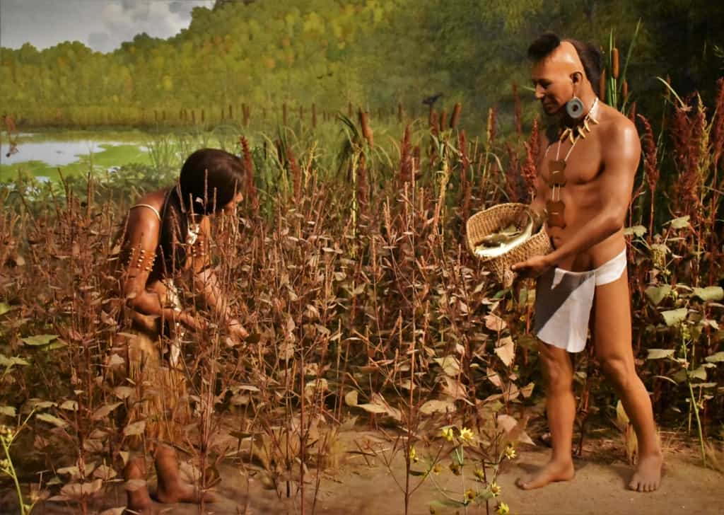 The native indians learned to live in harmony with the land and found all they needed in the fields and lakes nearby.