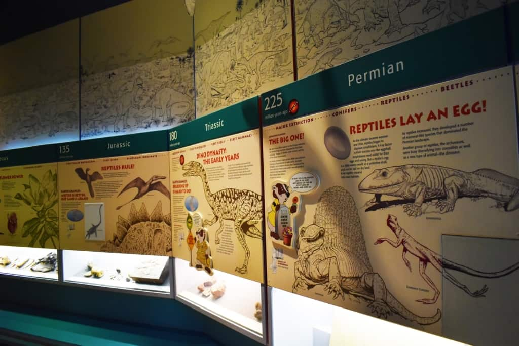 Traveling through time is made easier with the timeline of prehistoric times.