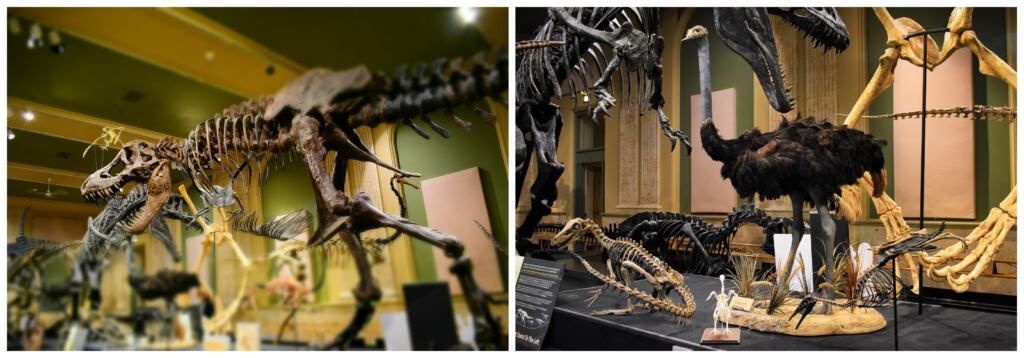 The Dinosaur Discovery Center shows guests the connection between dinosaurs and birds.