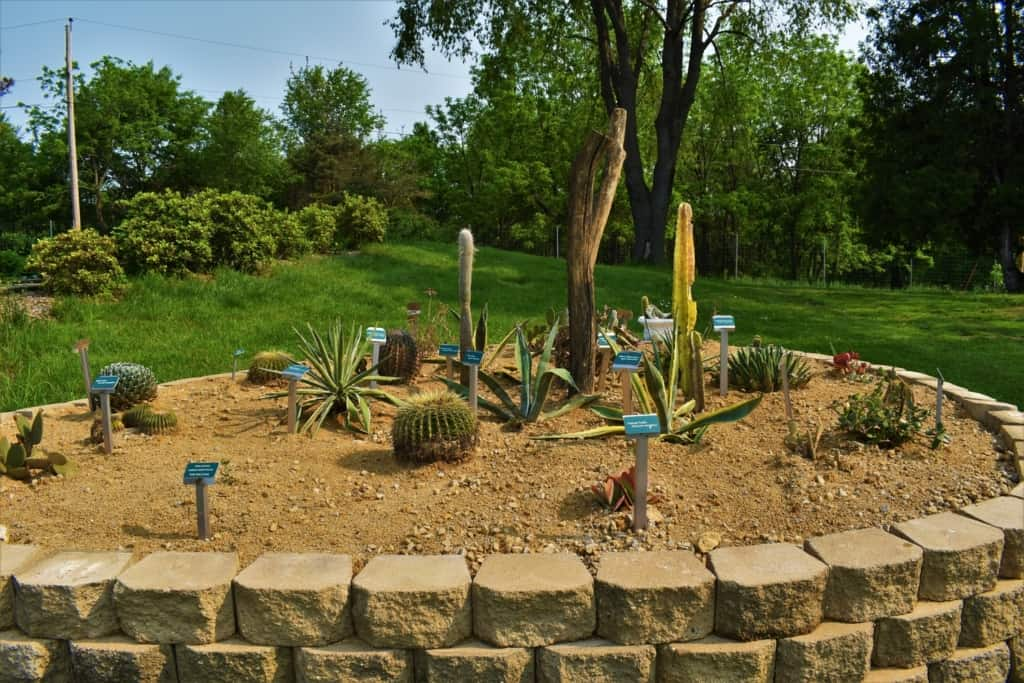 We loved discovering that cacti will grow even in the wild winter weather of the Midwest.