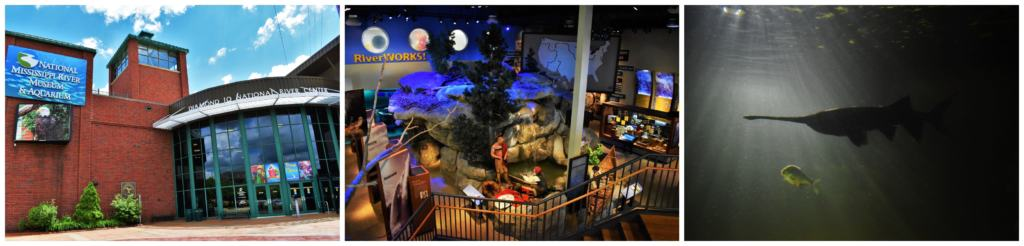 The National Mississippi River Museum is the perfect place to gain a new perspective on the importance of our waterways.