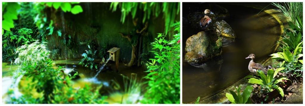 Inside the tropical atrium we discovered plenty of lush vegetation, and a family of ducks.
