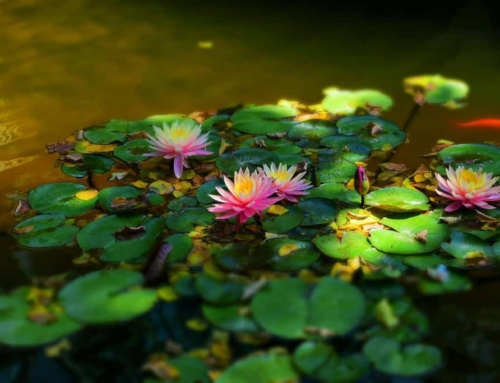 Peace In The Panhandle – Amarillo Botanical Gardens
