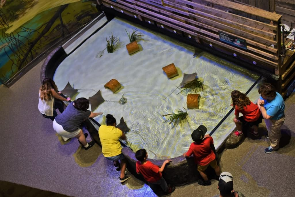 As we explored the exhibits about nature's highway, we came to a touch tank filled with stingrays.