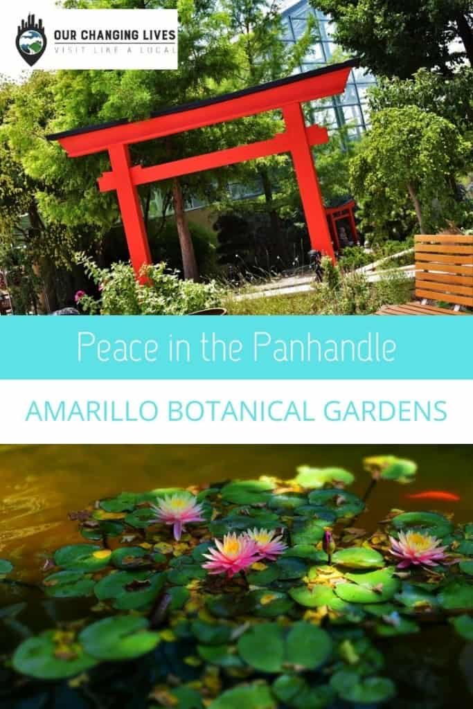 Peace in the Panhandle-Amarillo Botanical Gardens-flowers-koi pond-water lilies-attraction
