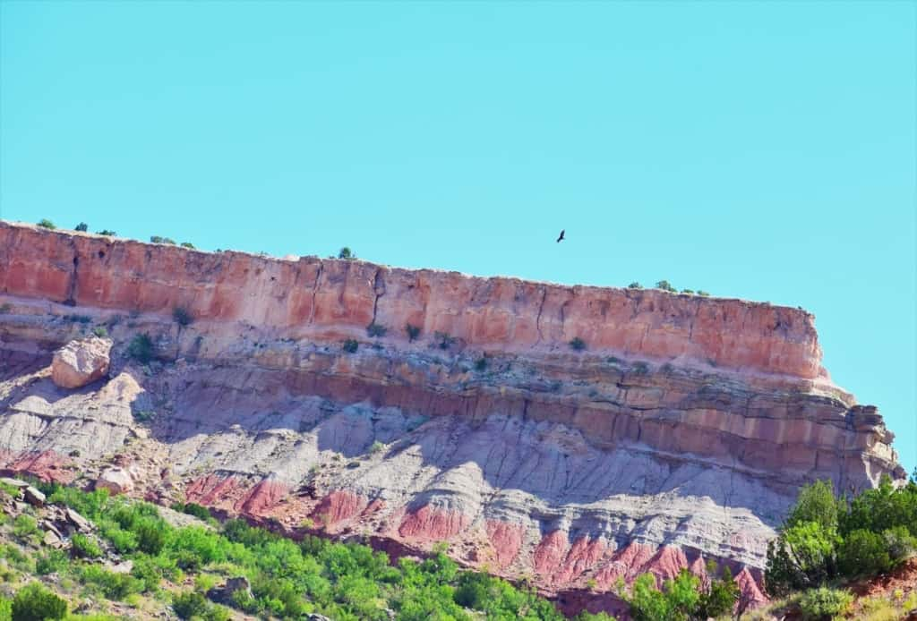 A raptor circles over a ridge in the canyon.