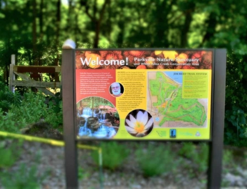 Parkville Nature Sanctuary – A Walk On The Wild Side