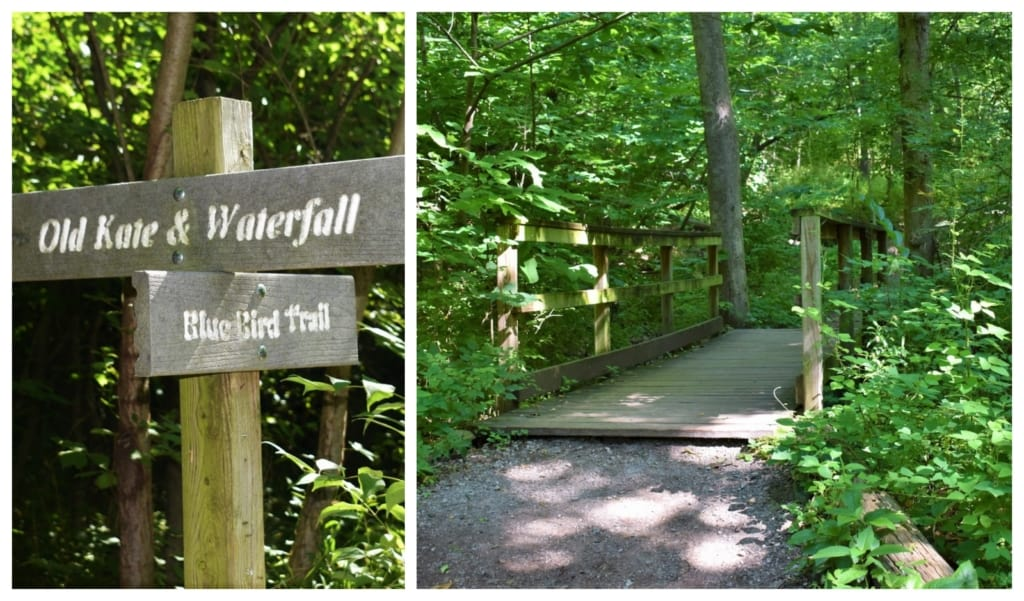 With a limited amount of time at the Parkville Nature Sanctuary, we chose to hike only one path.