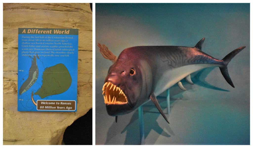 Scary creatures would have plied the waters during life in dinosaur days.