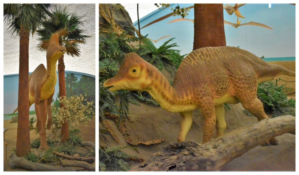 plant eaters were common along the shoreline of the inland sea that once covered Kansas.