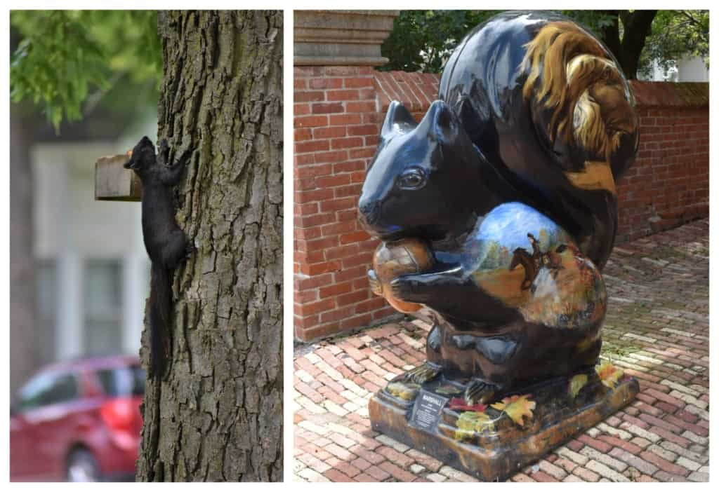 We found it easy to fall in love with black squirrel watching in Marysville, Kansas.