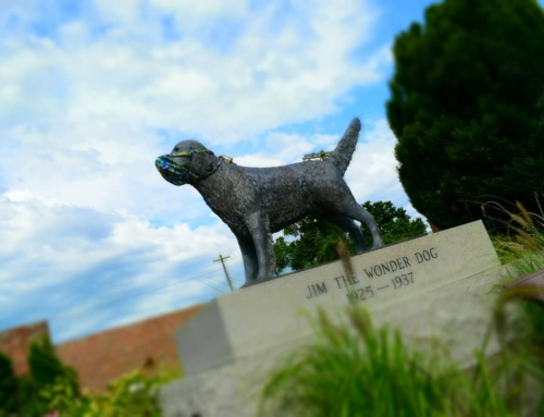 The Wonder Dog Of Marshall